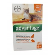 Advantage Chat et Lapin 1 à 4 kg x 6